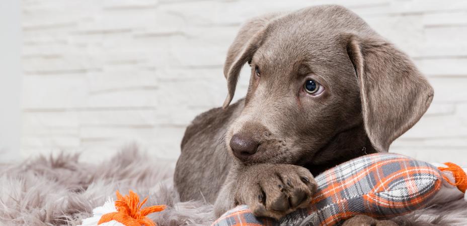 Alles voor je hond vind je bij Tuincentrum de Boet | DeBoet.nl