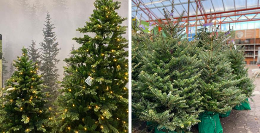Echte Kerstboom Kopen? | Kom naar Tuincentrum De Boet | DeBoet.nl
