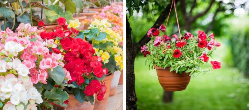Eenjarige planten kopen? | Kom naar Tuincentrum De Boet | DeBoet.nl