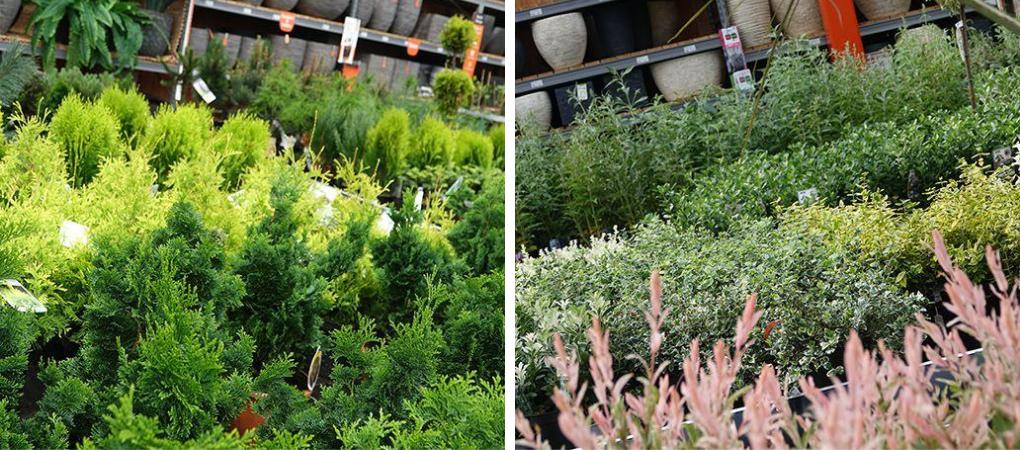 Heesters Kopen? | Kom naar het tuincentrum in Hoogwoud | DeBoet.nl