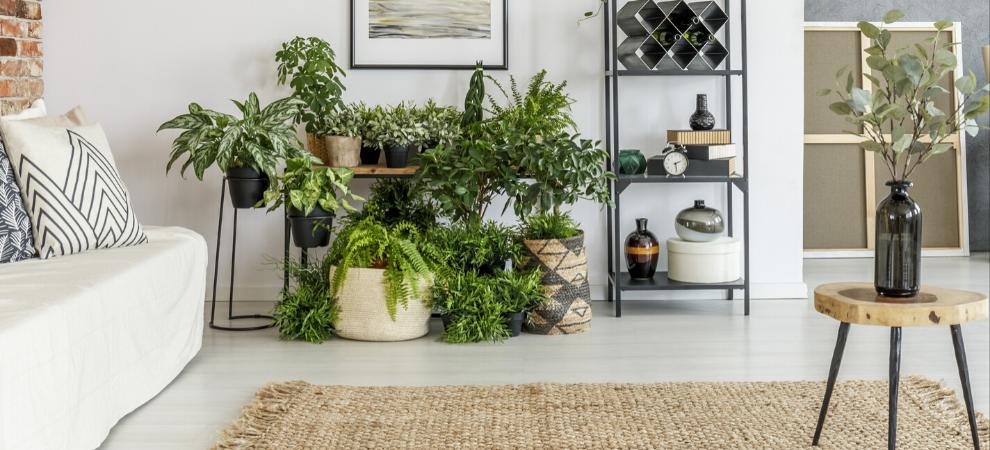 Kamerplanten kopen? | Kom naar tuincentrum de Boet! | DeBoet.nl