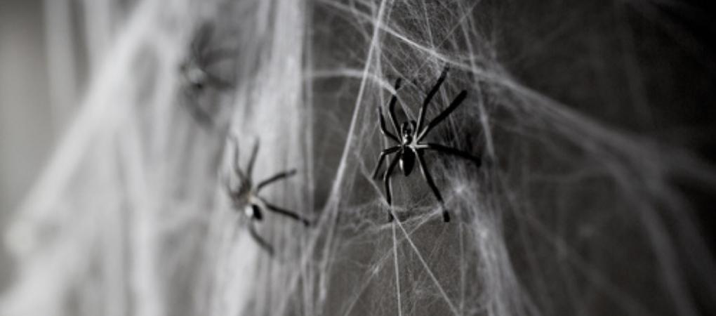Spinnen voor Halloween?   Kom naar Tuincenter De Boet   DeBoet.nl