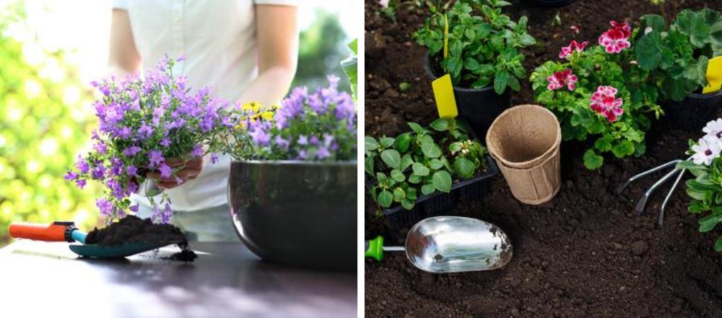 Zorg goed voor je planten en bloemen met de plantverzorging van Tuincentrum De Boet | DeBoet.nl