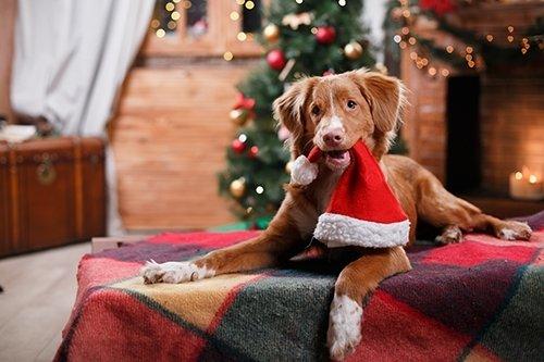 Veilige En Fijne Feestdagen Voor Hond En Kat Tuincentrum De Boet